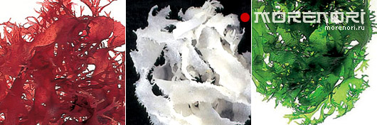 Водоросли тосака tosaka