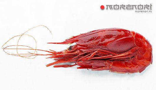 красная королевская креветка