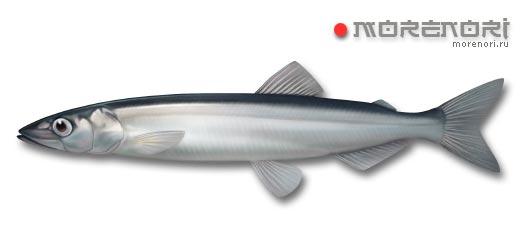 рыба капеллан (мойва)