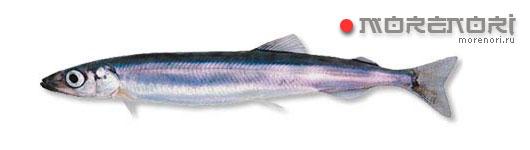 рыба спиринх