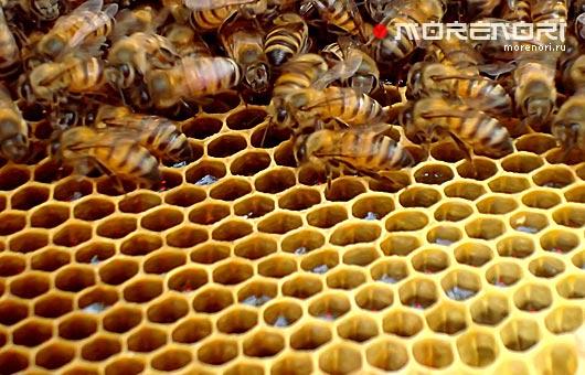 где купить мёд