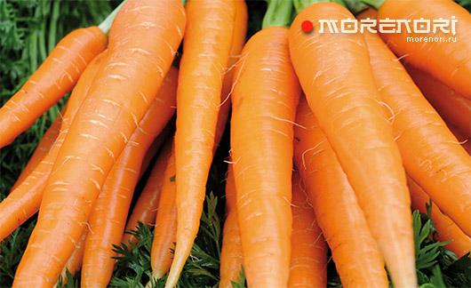Правила выбора моркови без нитратов