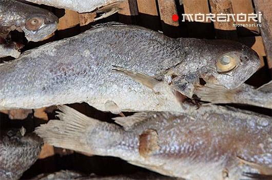 способ засаливания рыбы
