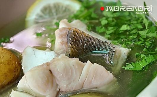 Уха из недавно пойманной рыбы