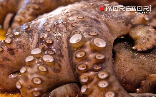 мясо осьминога