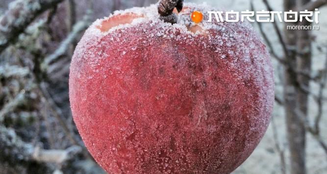 Замораживание яблок
